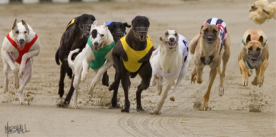 Dog racing betting explained variance superbowl betting grids