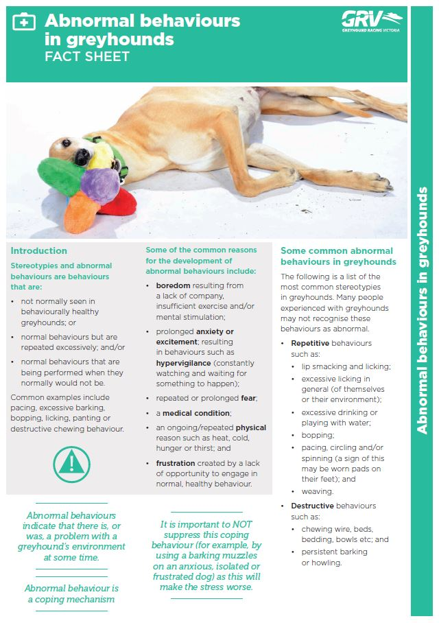 Socialisation and Rehoming Poster