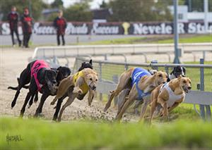 Greyhound racing betting terms explained illegal soccer betting advice